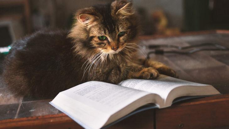 読書の時、メモするタイミングは?【読んだ内容を覚えるためにできること】